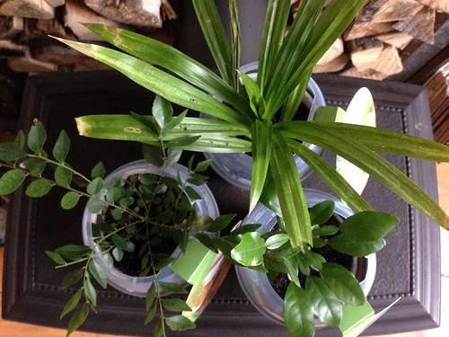 tropische kruidenplantjes