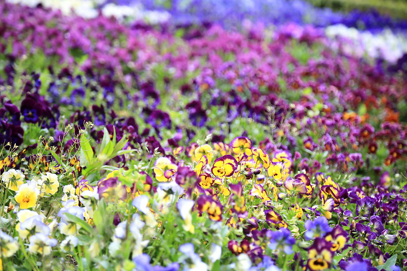 fleurs colorées jardin botanique madrid