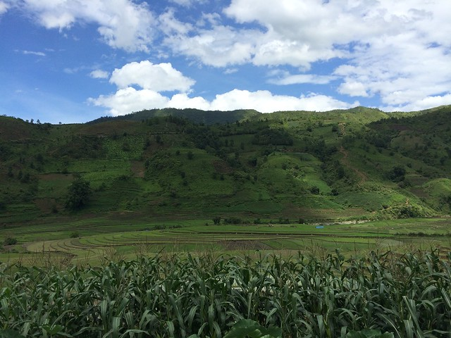 Crop-livestock systems in Vietnam