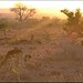 Sunrise (Kruger National Park) by LC's Eye (Wild Images of Africa)