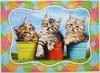 Siberian Kittens in Flowerpots