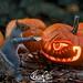 pumpkin carver (3)