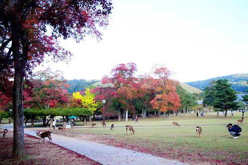 奈良。紅葉黃葉和鹿