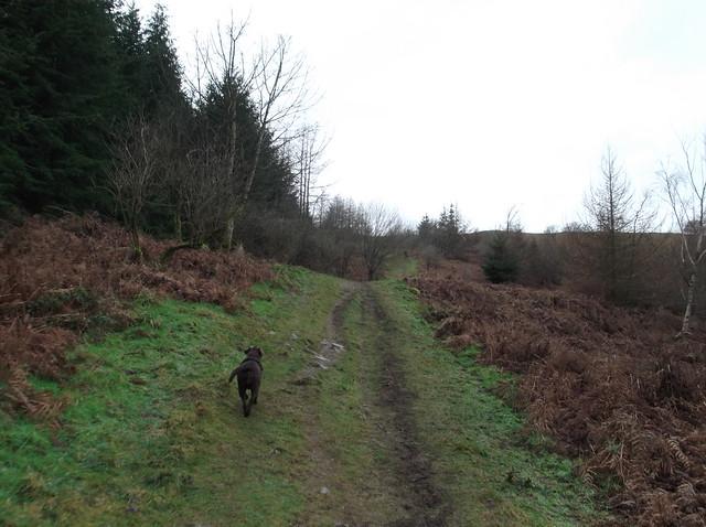 breidden hill 017