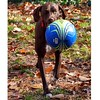 Cello loves her soccer ball almost as much as dock diving! TGIF!