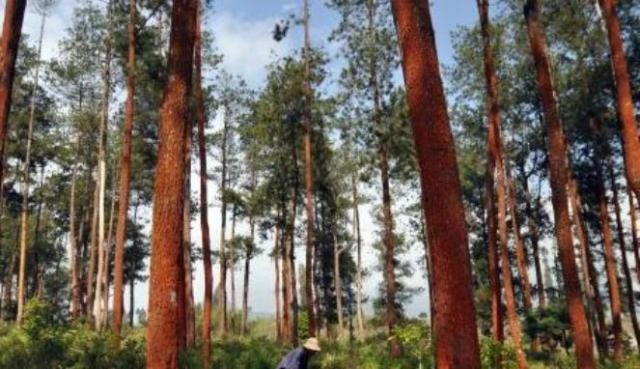 Hutan Lindung Jadi Lahan