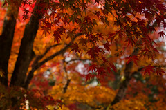 Nanzen-Ji, Kyoto / 南禅寺(京都)