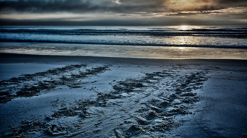 sunrise flickr florida turtle fl atlanticocean epa toprint turtletracks flaglercounty flaglerrivertoseapreserve