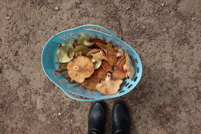 Mushroom foraging adventure