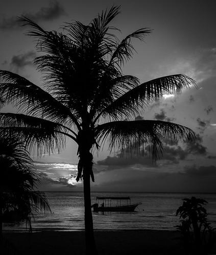 trees bw white black beach water sand honduras palm roatan qualistat