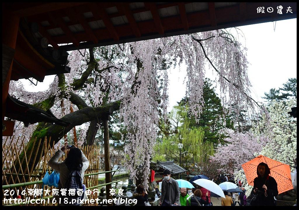2014京都大阪賞櫻自由行.奈良DSC_0906
