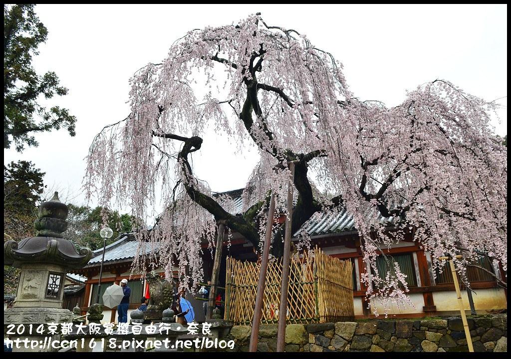 2014京都大阪賞櫻自由行.奈良DSC_0888