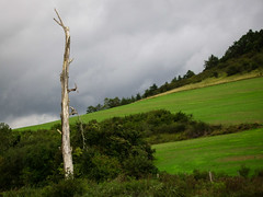 Dead Tree - Photo of Vesvres-sous-Chalancey