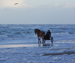 horse and carriage at Scheveningen