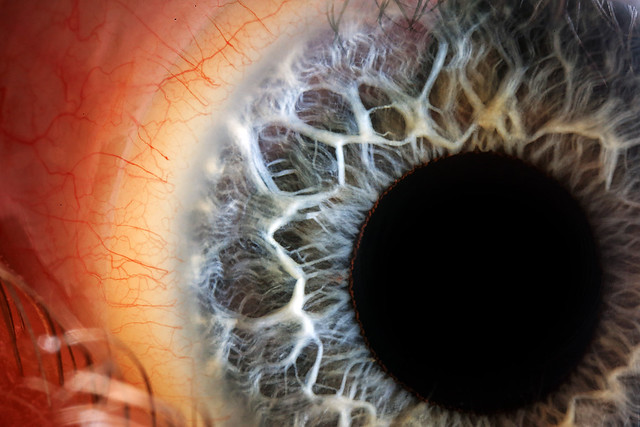 Thine Iris