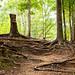 La Nana Creek Trail 2