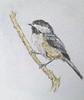 chickadee 20141101_123635