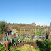 Small photo of Allotments