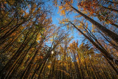 november trees fall canon rebel nationalpark tennessee fallcolors sigma valley 1020mm cadescove t3i thegreatsmokymountains ultrawideangle