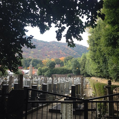Kyoto - bamboo forest cemetary