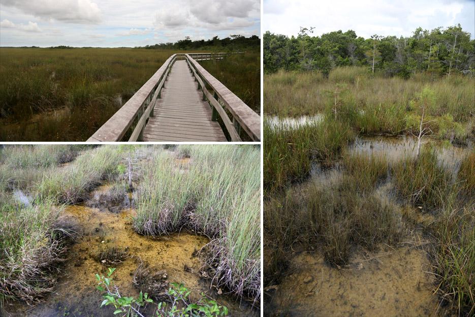 090714_Everglades06