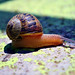 Caracol! by PHOTOS | INSANE