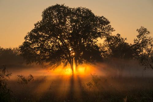 park sunrise texas foggy cresent schertz