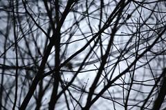 Winterblues 325/365