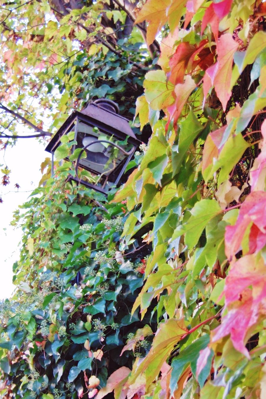 Autumn in Paris (7)