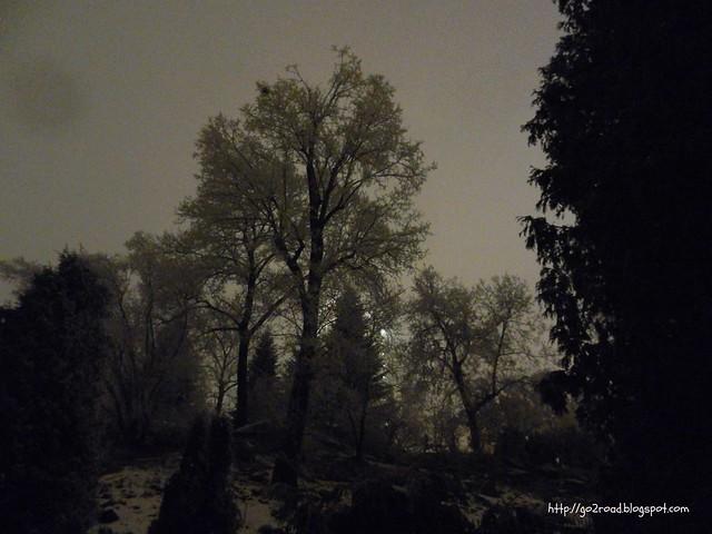 Снег в ботсаду