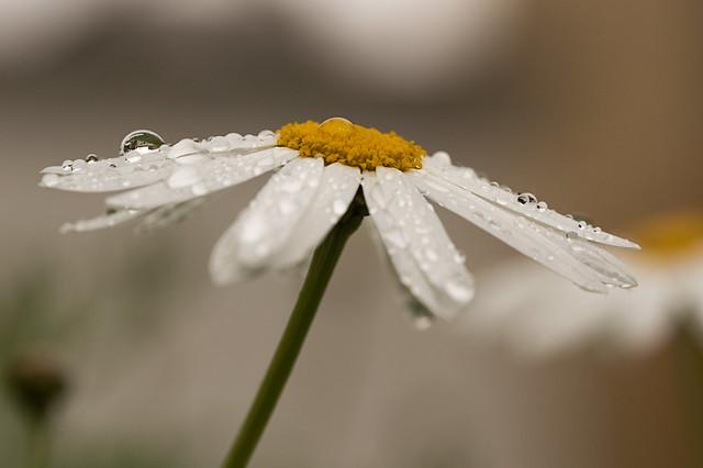Soportando la lluvia