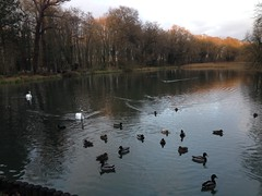 Christmas visit to Coombe Country Park.