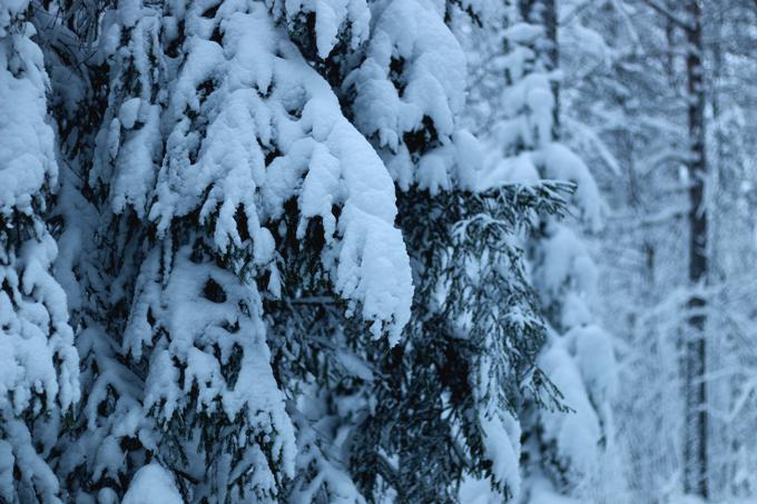 talvi 117