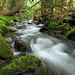 Hypsy Creek (1) by Nicholas_T