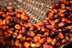 Palm oid seeds on market in Sekou (Benin)