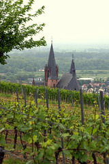 Oppenheim, Weinberg und Blick zur Katharinenkirche  (vineyard and view of St. Catherine's Church)