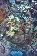 PP Divers 14