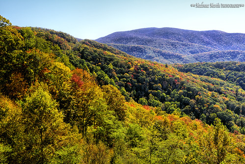 autumn trees mountains tennessee scenic