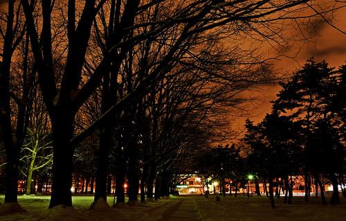 snow japan night sapporo nikon hokkaido 北海道 冬 札幌 winterscene maruyamapark 円山公園 d7100 夜の公園 kaifudo saekinoi