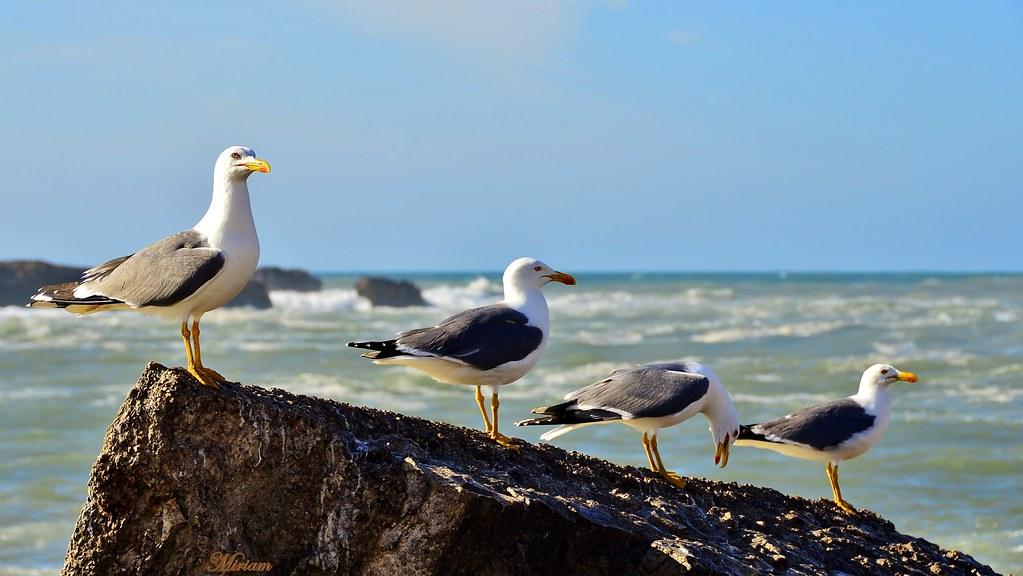 seagulls ...