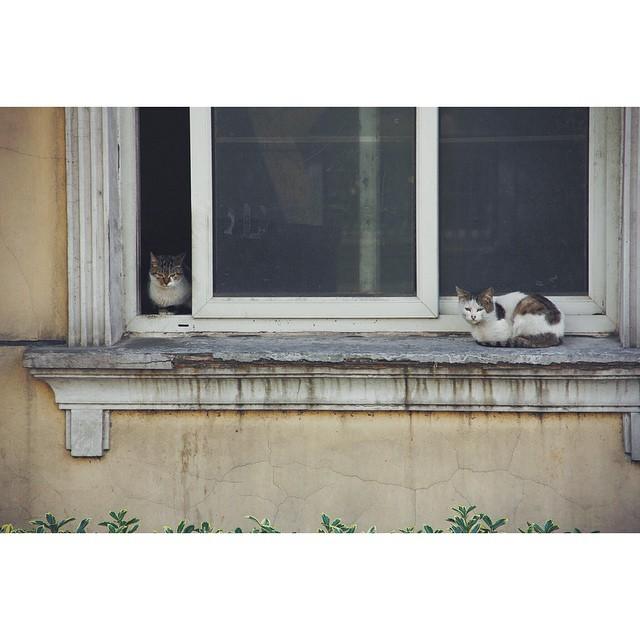 #cat#vscocam#shanghai#上海#猫#kitty#catsofinstagram#InstaSize
