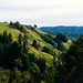 Small photo of Cazadero
