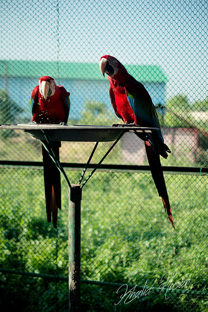 The beautiful Macaws