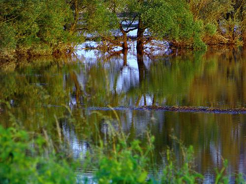 trees sunset grass landscape bush poland polska backwater trawa drzewa krajobraz krzew zmierzch światłocień rozlewisko chairscuro
