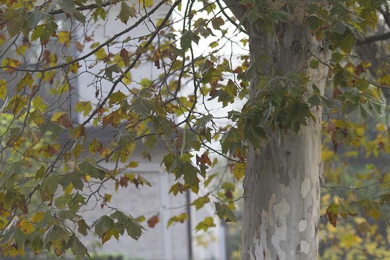 16 Fall in Full Swing 2IMG_6934