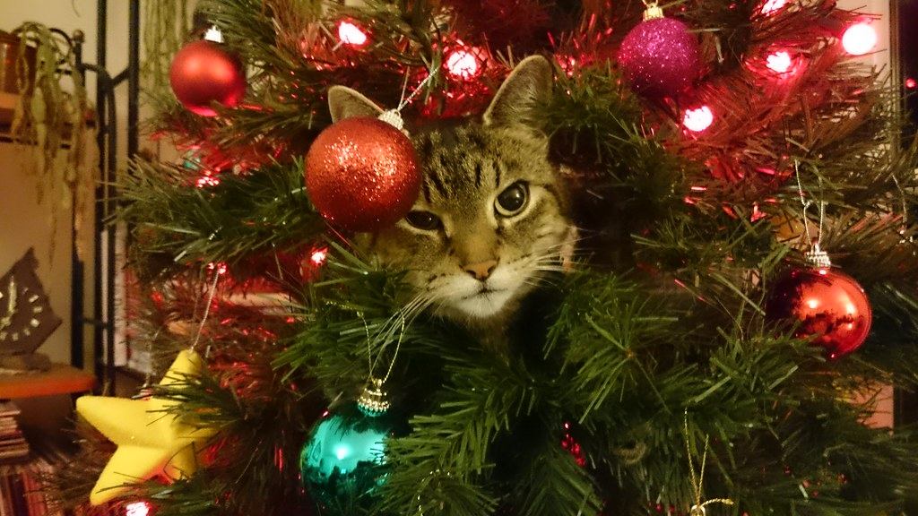 The face of evil (cat in the Christmas tree)