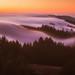 Mount Tam Fog by tobyharriman