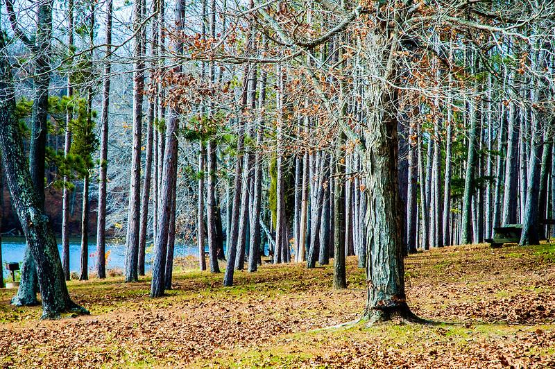 Ferdinand State Forest
