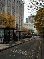 Pine & 3rd Island Bus Stop