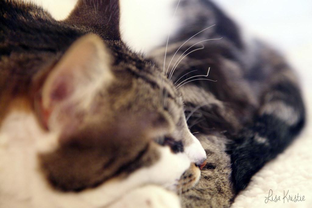 burned burnt whiskers cat closeup